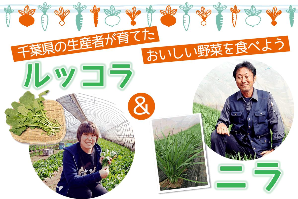 【食育】千葉県の生産者が育てたおいしい野菜を食べよう(1)ルッコラ&ニラ