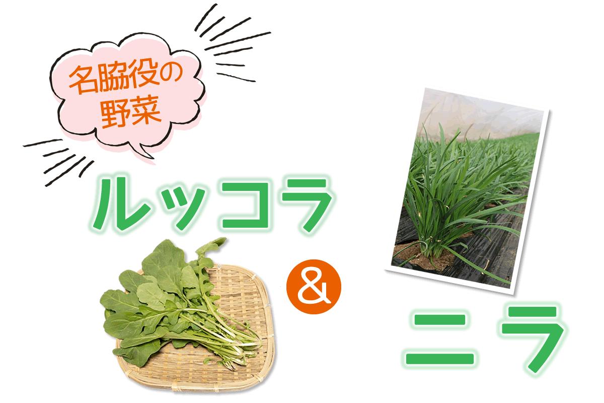 千葉県の生産者が育てたおいしい野菜を食べよう ルッコラ&ニラ