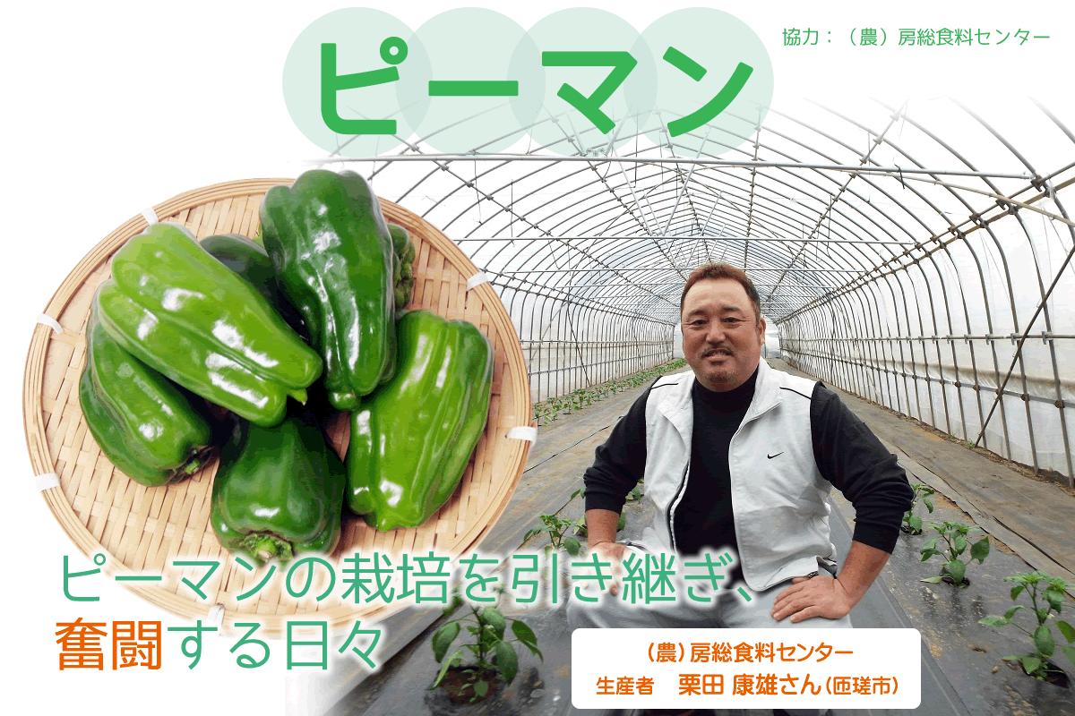 【食育】千葉県の生産者が育てたおいしい野菜を食べよう(2)ピーマン