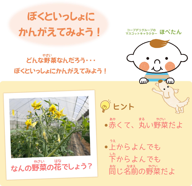 ぼくといっしょに考えてみよう!このお花は、野菜になるよ!なんの野菜かわかるかな??