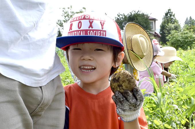 ジャガイモを収穫している写真