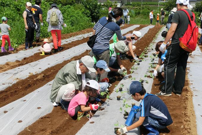 秋野菜の植え付けの様子