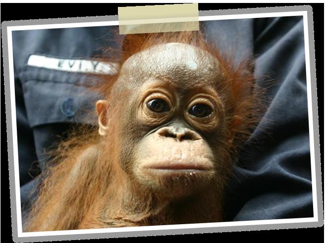 熱帯雨林保護と募金について