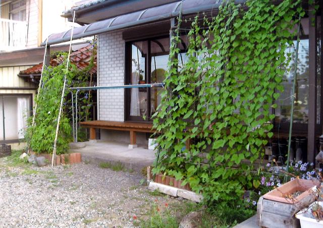 S・Iさん(那須烏山市)のグリーンカーテン写真
