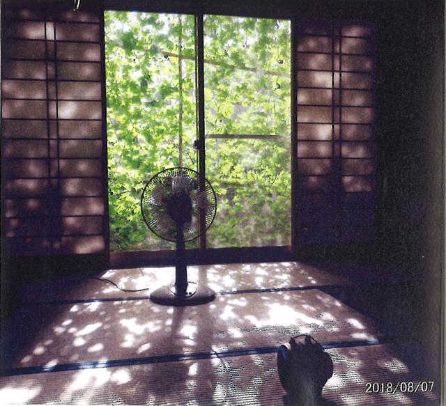 かっちゃんママさん(宇都宮市)のグリーンカーテン写真
