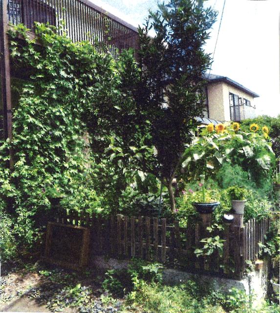 はるこさん(宇都宮市)のグリーンカーテン写真