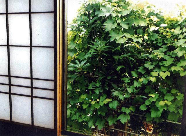 K・Aさん(鹿沼市)のグリーンカーテン写真