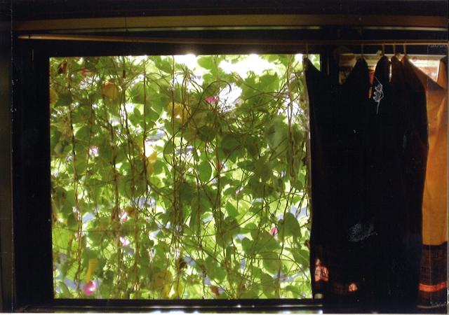 Y・Yさん(鹿沼市)のグリーンカーテン写真