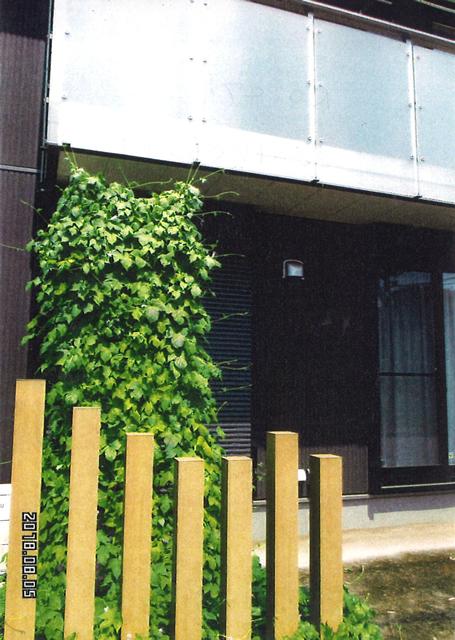 かえでのママさん(さくら市)のグリーンカーテン写真
