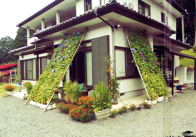 はるちゃんさん(益子町)のグリーンカーテン写真