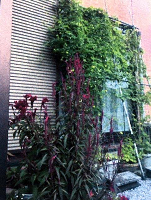 れえこさんさん(栃木市)のグリーンカーテン写真