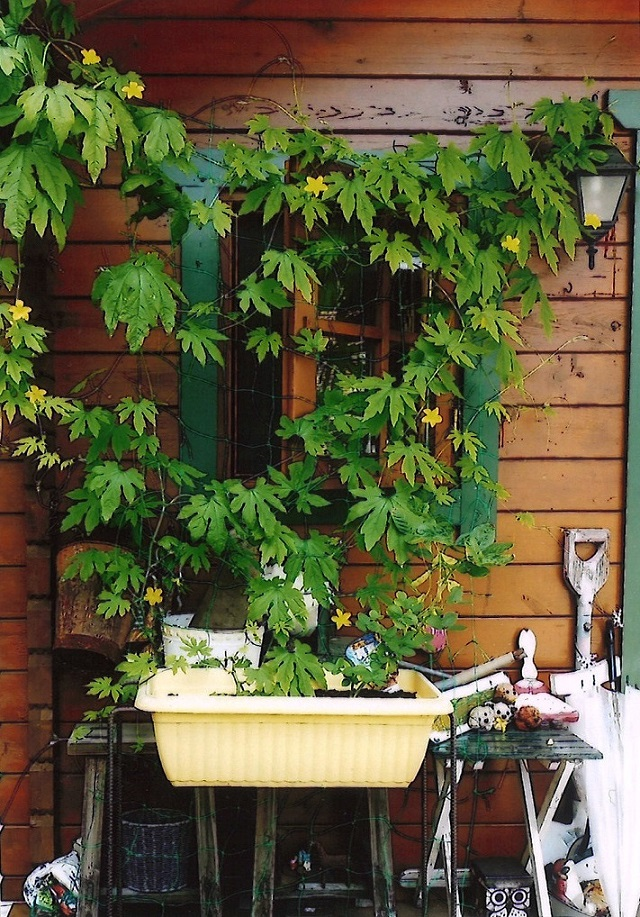 グリーンカーテン写真イメージ