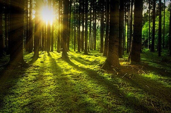 パーム油・森林資源(紙・パルプ・木材)に関する 持続可能な商品調達方針を策定しました