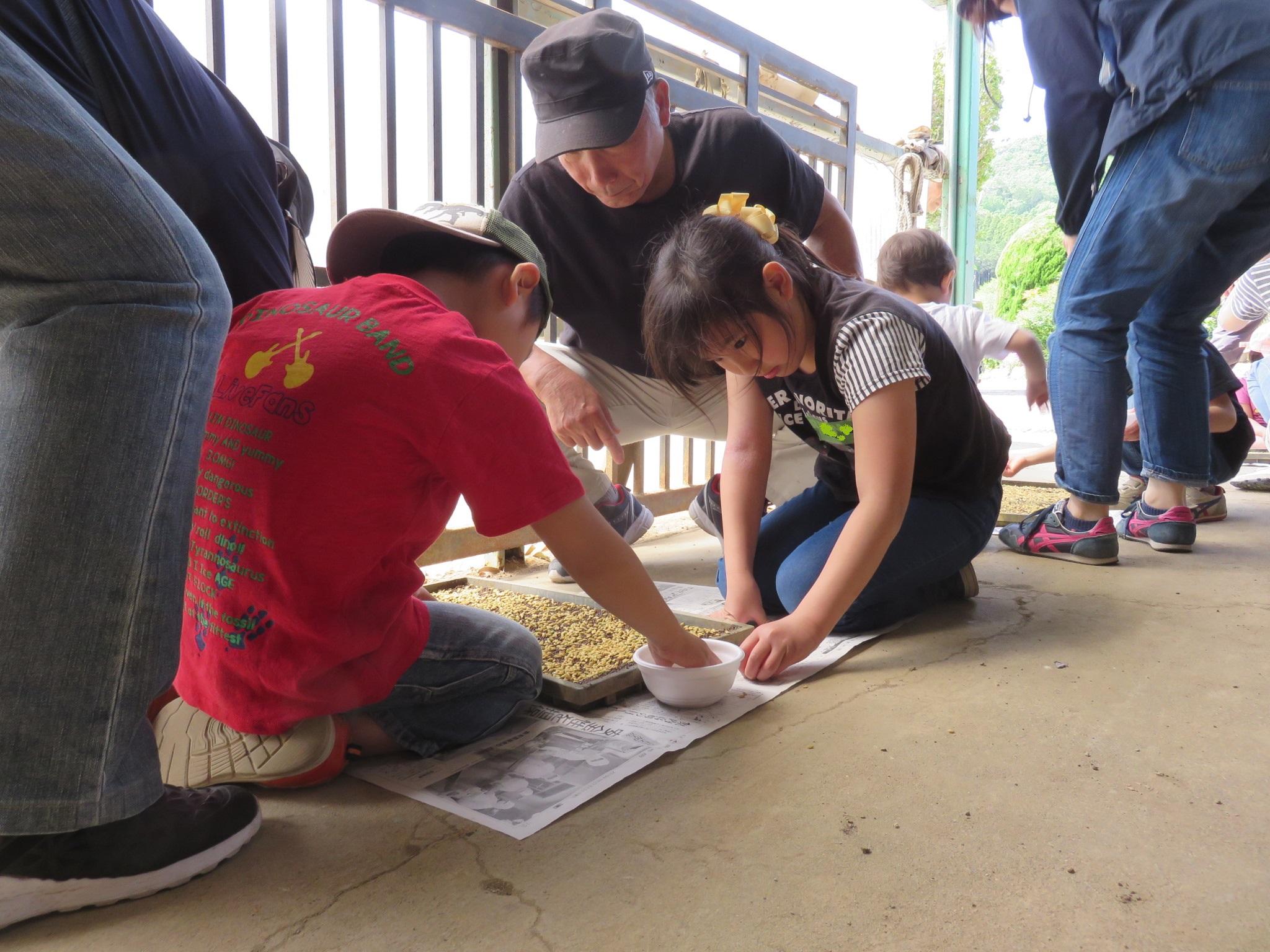 5月5日(日)足利ブロック「田んぼの学校」に組合員さん14家族50名が参加しました
