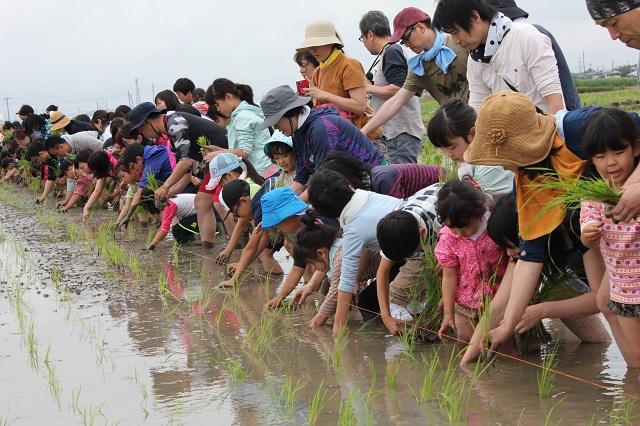 「田んぼのがっこう(川島会場)第1回・田植え体験」を開催しました