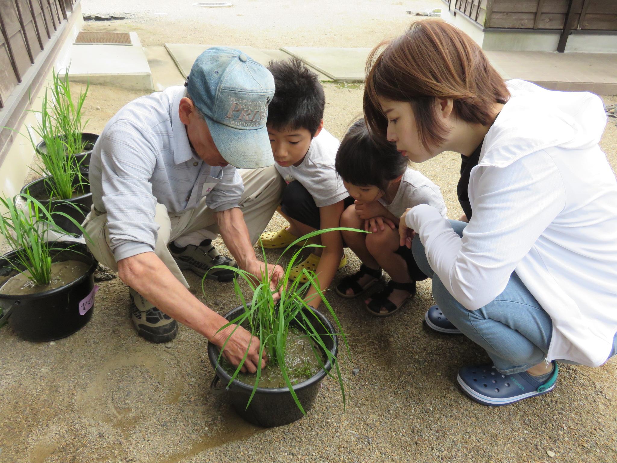 7月7日(日)「田んぼの学校」に組合員さん48名が参加しました