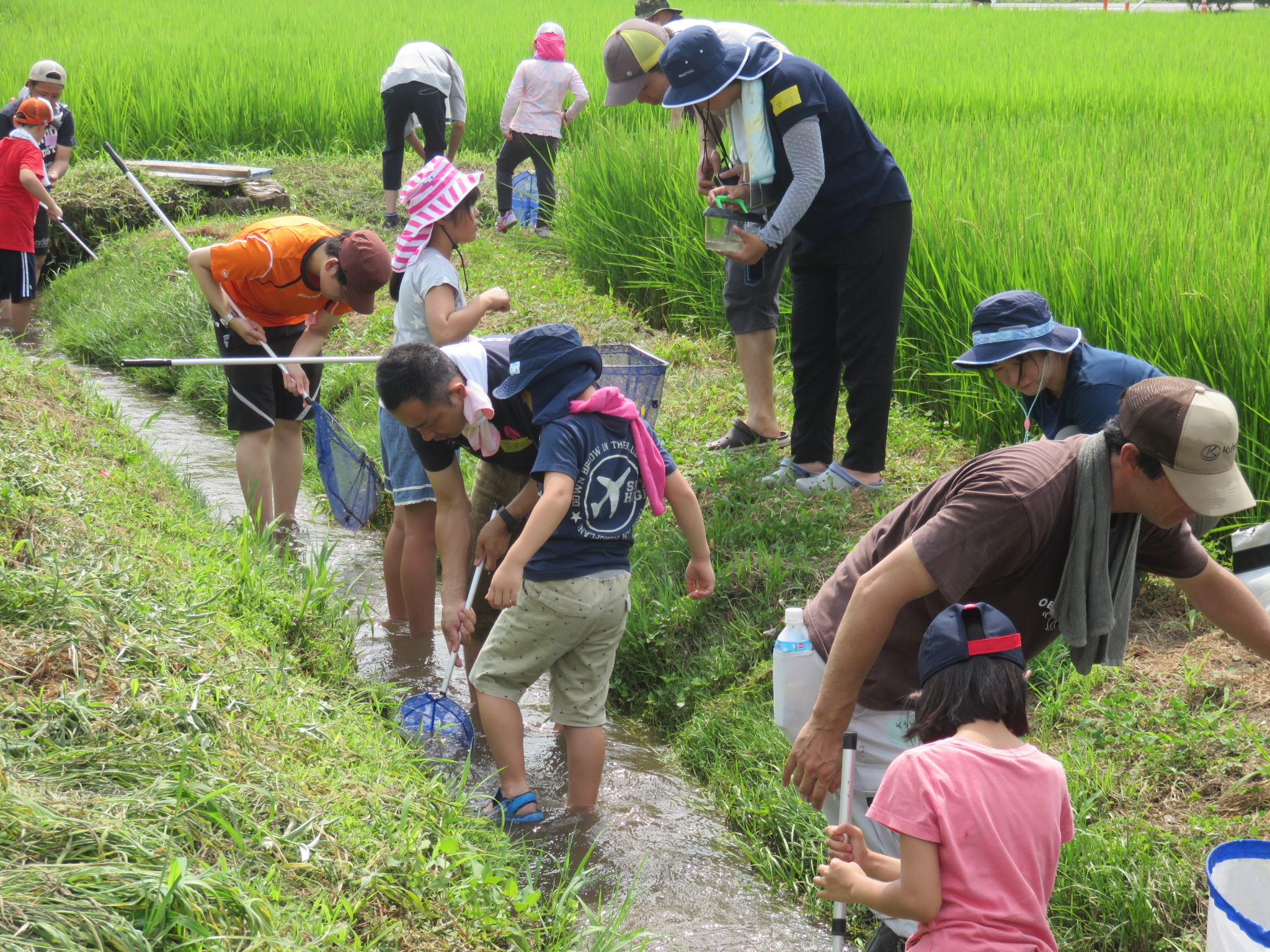 夏の生産者交流会「小川のいきもの調査」を開催しました
